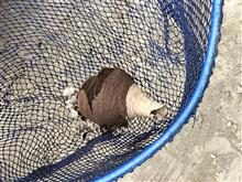 蜂の巣駆除とサーフィン