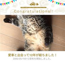 愛猫と出会って12年!