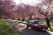 コレチと桜と船とパンダと。