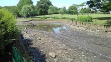 池の水全部抜きます収録の翌日