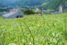 ザ・山菜狩り。 ~新潟県湯沢 その1