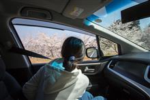 娘とSAKURA Drive