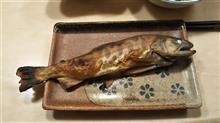 釣ってきた山女魚(*'▽')
