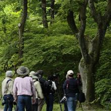 大阪市立大学理学部附属植物園に行ってきました♪