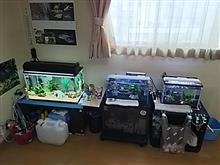 (σ≧▽≦)σ釣人水槽の進化~✴