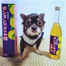 文旦飴(ボンタンアメ)のお酒