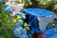 青いタクシーに成って~青紫陽花と!