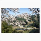 Sakura道 Part2。