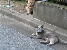 野良猫会合中に睨まれた