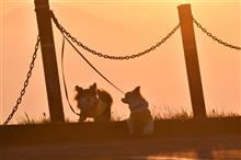 美ケ原 朝景14 「逆光の美しい朝でした(^^)」 180603