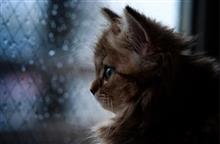 🌂 梅雨に入ったのね☂