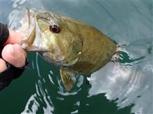 恒例の檜原湖釣行