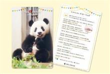 6月12日 上野赤パン しゃんしゃん 誕生日を迎え1歳に…