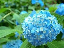 青、紫、ピンク、白 今の季節、日本で息を飲む美しさを、楽しめる名所はここだ!=中国メディア