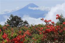 甘利山でレンゲツツジと富士山と