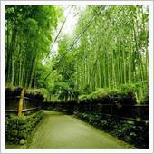 秋の京都旅行、企画書作成中  ...
