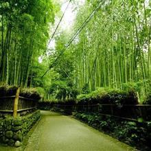 秋の京都旅行、企画書作成中 いかん、明々後日出発や!
