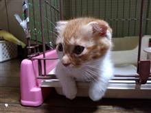 更に新しい猫