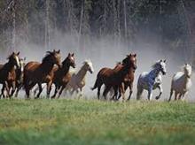お馬さんが逃げた💦  柵は頑丈に^_^
