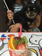 今日で我が家の愛犬が1歳になりました!!