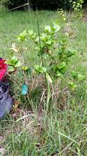 ヤマノススメの植樹祭。