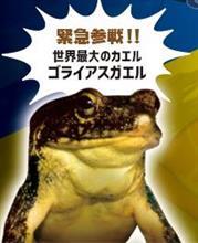 緊急参戦‼︎  ケロレンジャー  世界最大のカエル   …の巻   平成30年6月27日