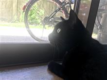暑いぞ黒猫