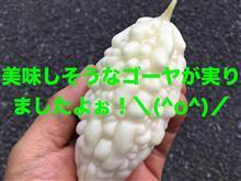 ▼【動画】収穫