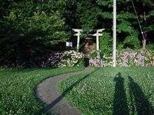 紫陽花を見て来ました。