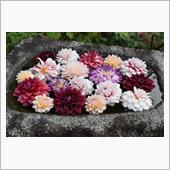 手水舎の浮き花
