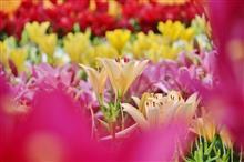百合と紫陽花。