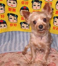 中華な絨毯?
