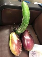 茄子と胡瓜で元気に!