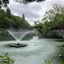 ◆井之頭公園のかいぼり の成果