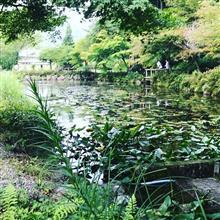 モネの池に行ってみた