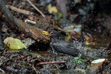 涼を求めて避暑地へ野鳥撮影