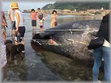 クジラが…