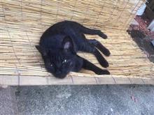 ネコの避難スペース(*^^*)