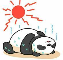 猛暑中のちょっとしたDIY(+_+)💦