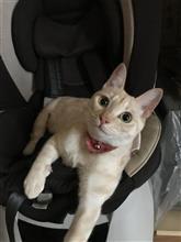 猫🐱🐈にもチャイルドシート^_^