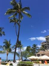 ハワイで車選び⁉