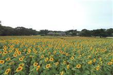 撮影2018夏~ひたち海浜公園のヒマワリ~