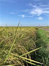 2018 稲刈り