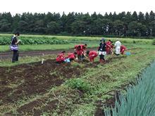 農業体験実習終了😁