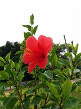 The 沖縄‼