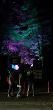 下鴨神社糺の森の光の祭へ行って来ました。