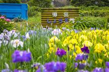 櫛生菖蒲園。