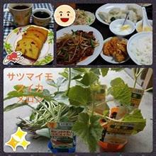 サツマイモ・スイカ・メロン植え