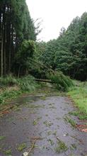 田舎台風一過   (´・ω・`)