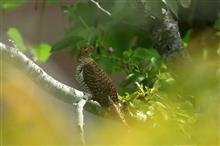 地元近隣公園でも夏鳥の渡りがやっと少し始まりました。